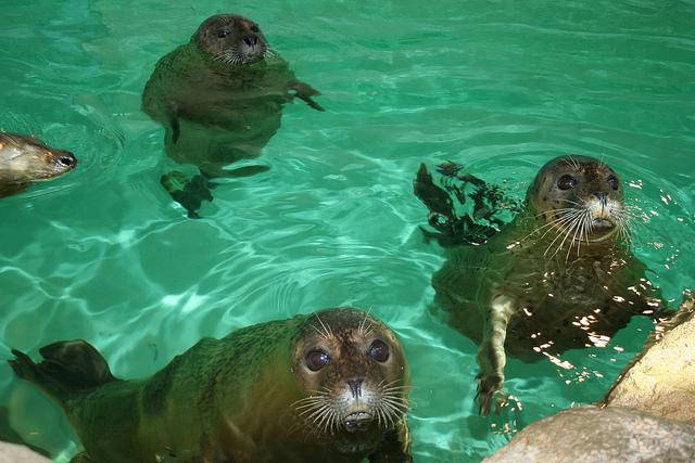 Grade 1 trip to the Maritime Aquarium